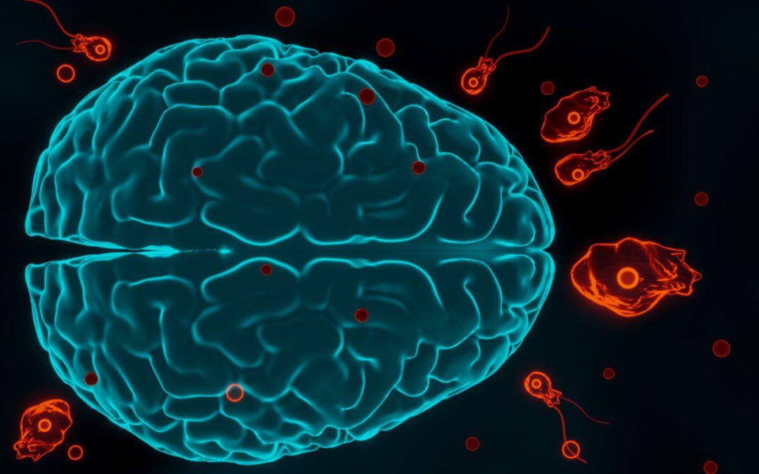 نیگلیریا فاولرائی ۔ مرض ۔ تشخیص اور علامات